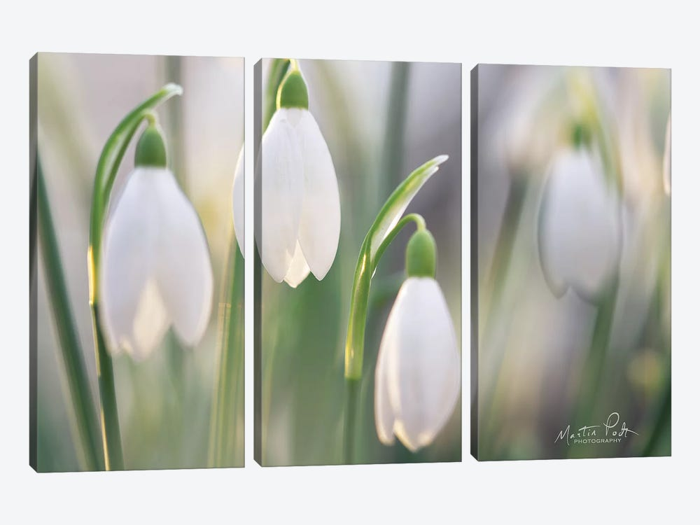 Delicate by Martin Podt 3-piece Canvas Art