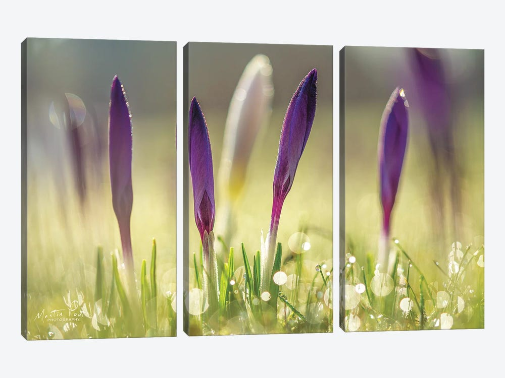 Four in a Row by Martin Podt 3-piece Art Print