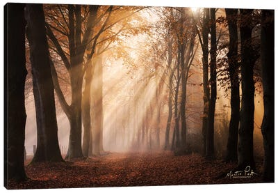 Look for the Light in All Things Canvas Art Print