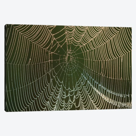 Morning dew on a spider web, Cameron Prairie National Wildlife Refuge, Louisiana Canvas Print #MPR15} by Maresa Pryor Art Print