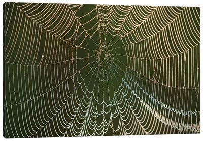 Morning dew on a spider web, Cameron Prairie National Wildlife Refuge, Louisiana Canvas Art Print