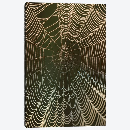 Morning dew on a spider web, Cameron Prairie National Wildlife Refuge, Louisiana Canvas Print #MPR16} by Maresa Pryor Canvas Print