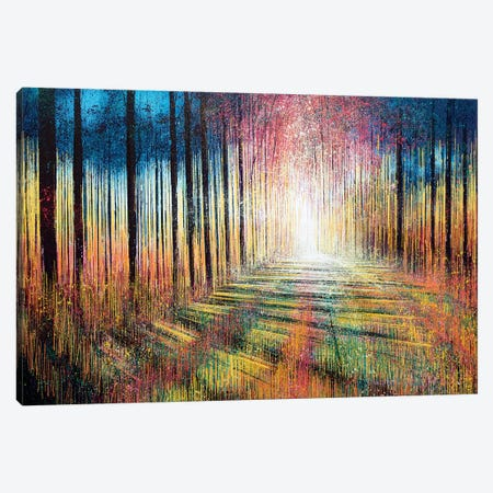 Morning Light Through Trees Canvas Print #MRC8} by Marc Todd Canvas Art Print
