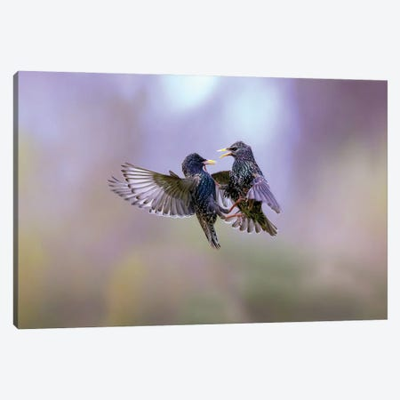 The Dance Of The Starlings Canvas Print #MRD9} by Marco Redaelli Canvas Art