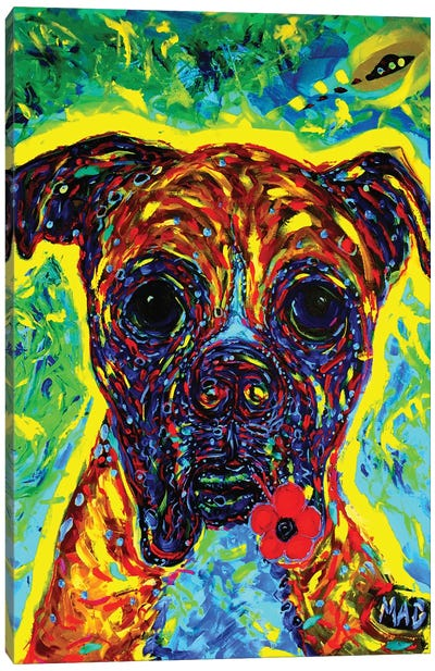 Boxer III Canvas Art Print
