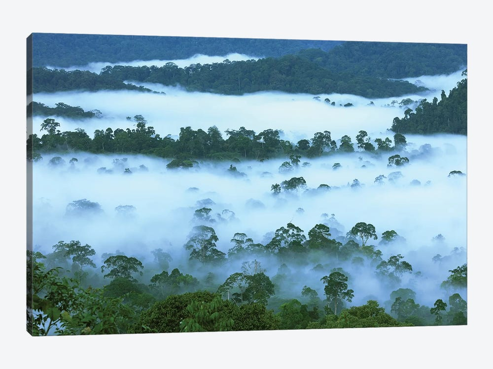 Canopy Of Lowland Rainforest At Dawn With Fog, Danum Valley Conservation Area, Borneo, Malaysia by Thomas Marent 1-piece Canvas Art Print