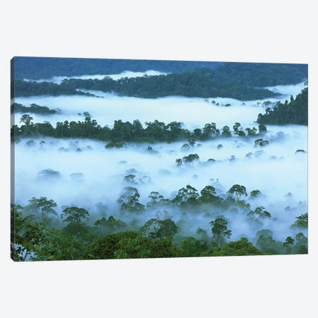 Canopy Of Lowland Rainforest At Dawn With Fog, Danum Valley Conservation Area, Borneo, Malaysia Canvas Print #MRN1} by Thomas Marent Canvas Wall Art