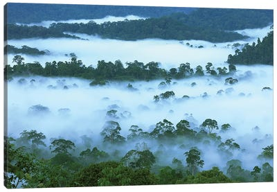 Canopy Of Lowland Rainforest At Dawn With Fog, Danum Valley Conservation Area, Borneo, Malaysia Canvas Art Print