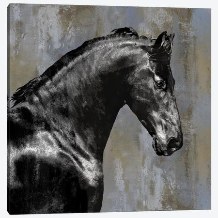 Black Stallion Canvas Print #MRO1} by Martin Rose Canvas Art Print