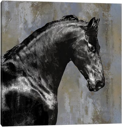 Black Stallion Canvas Art Print