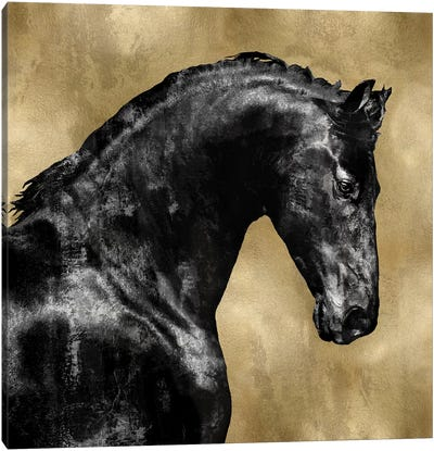 Black Stallion On Gold Canvas Print #MRO2