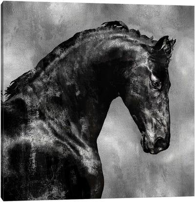 Black Stallion On Silver Canvas Print #MRO3