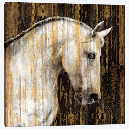 Horse II Canvas Print #MRO5} by Martin Rose Canvas Wall Art