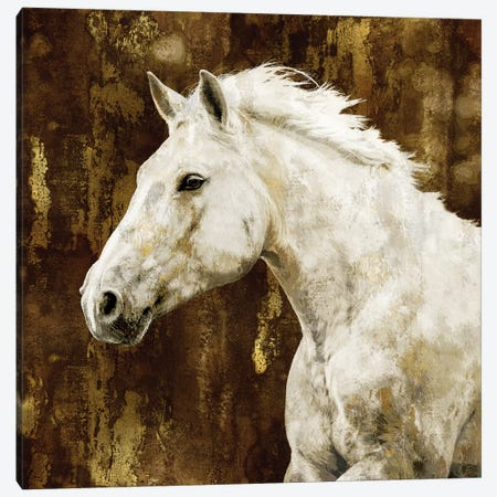 White Stallion Canvas Print #MRO6} by Martin Rose Canvas Artwork