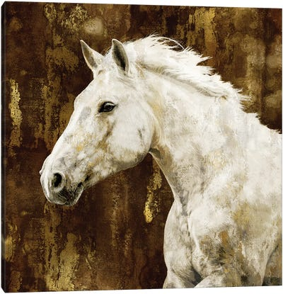 White Stallion Canvas Art Print