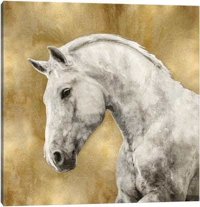 White Stallion On Gold Canvas Art Print