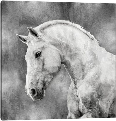 White Stallion On Silver Canvas Art Print