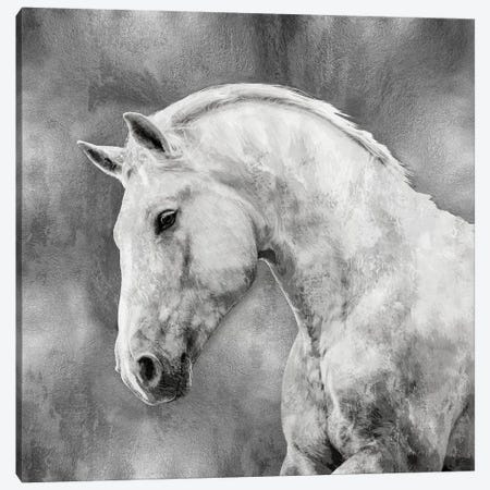 White Stallion On Silver Canvas Print #MRO8} by Martin Rose Art Print