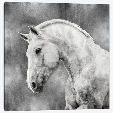 White Stallion On Silver Canvas Print #MRO8} by Martin Rose Art Print