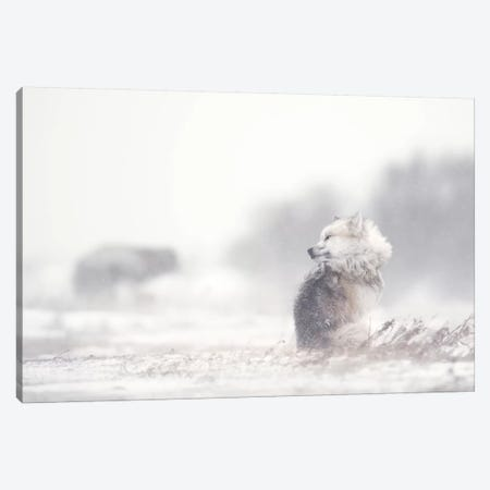 Dogs In The Storm Canvas Print #MRP4} by Marco Pozzi Canvas Wall Art