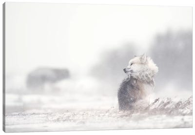 Dogs In The Storm Canvas Art Print