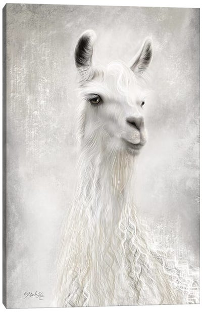 Lulu the Llama Up Close Canvas Art Print