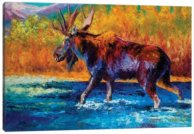 Autumn's Glimpse Moose Canvas Art Print