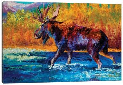 Autumn's Glimpse Moose Canvas Art Print