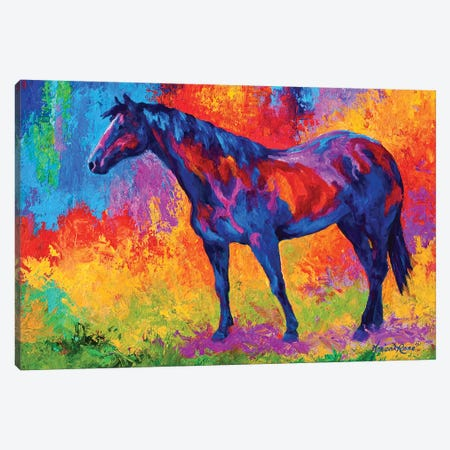 Bay Mare III Canvas Print #MRS13} by Marion Rose Canvas Wall Art