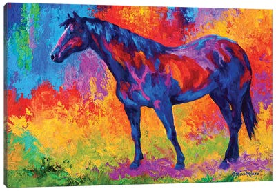 Bay Mare III Canvas Art Print