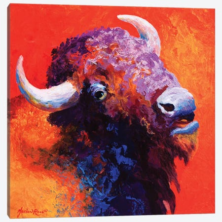 Bison Attitude Canvas Print #MRS16} by Marion Rose Canvas Print