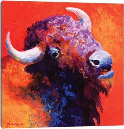 Bison Attitude Canvas Art Print