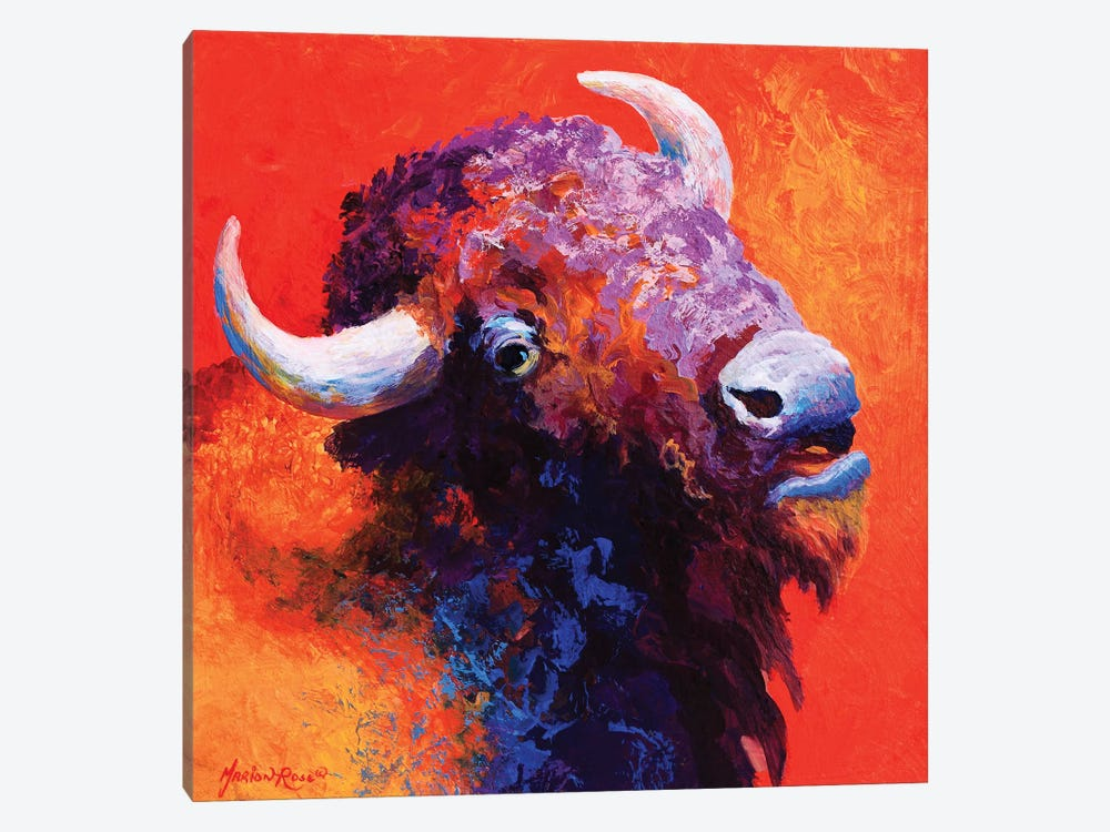 Bison Attitude by Marion Rose 1-piece Canvas Print