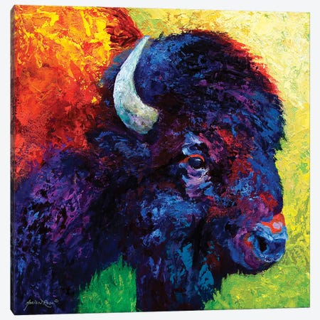 Bison Head III Canvas Print #MRS18} by Marion Rose Canvas Artwork