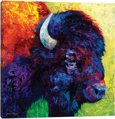 Bison Head III Canvas Art Print