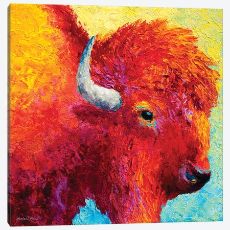 Bison Head IV Canvas Print #MRS19} by Marion Rose Canvas Art