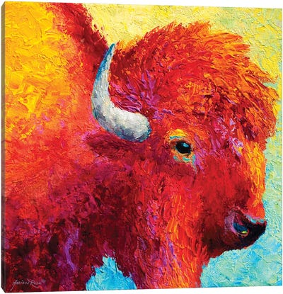Bison Head IV Canvas Art Print