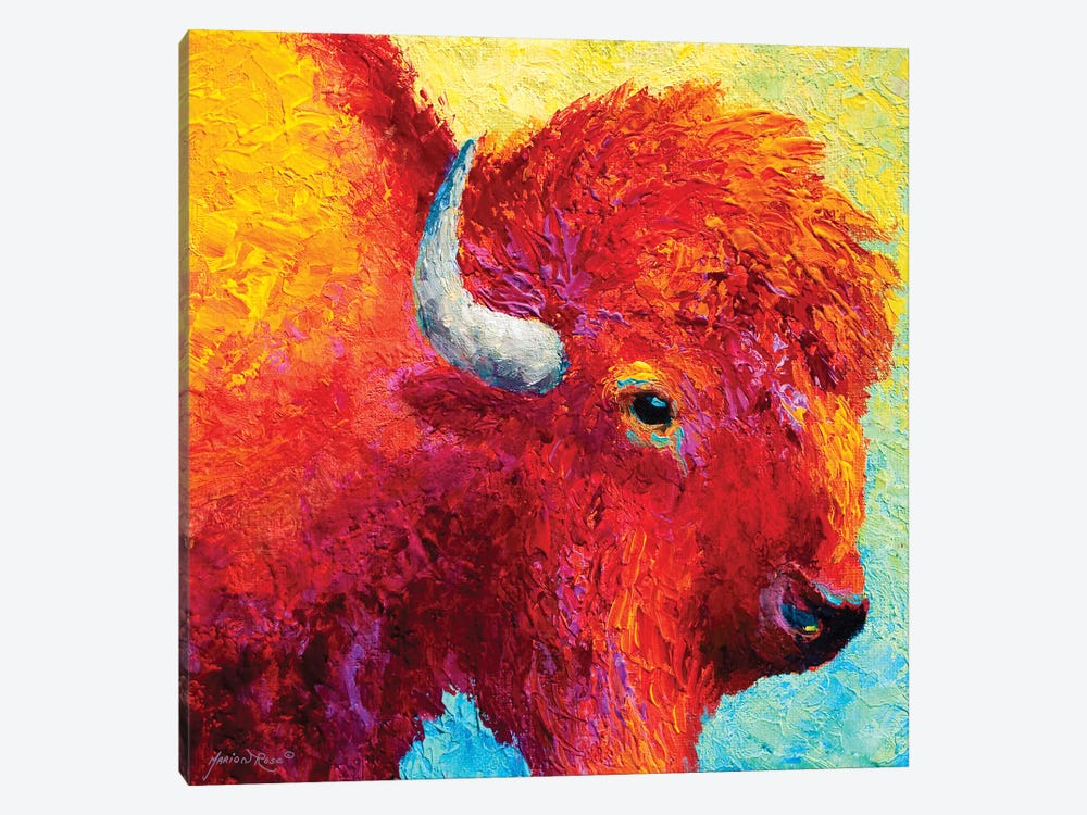 Bison Head IV by Marion Rose 1-piece Canvas Wall Art