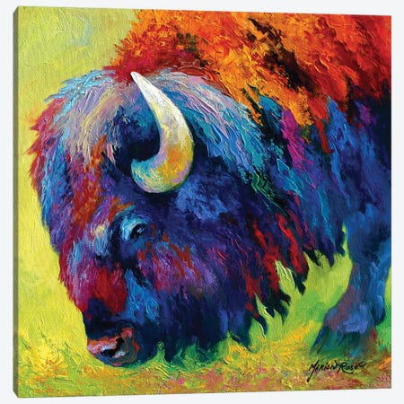 Bison Portrait II Canvas Print #MRS20} by Marion Rose Art Print