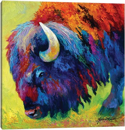 Bison Portrait II Canvas Art Print