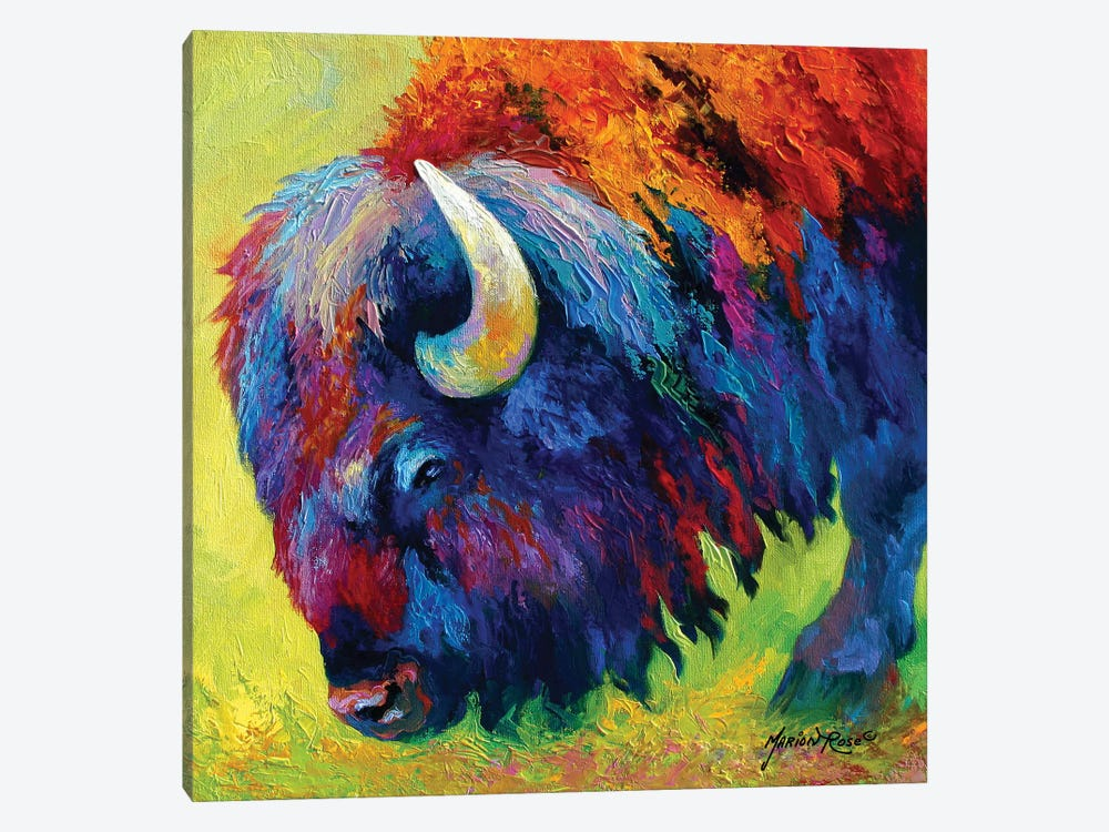 Bison Portrait II by Marion Rose 1-piece Canvas Wall Art