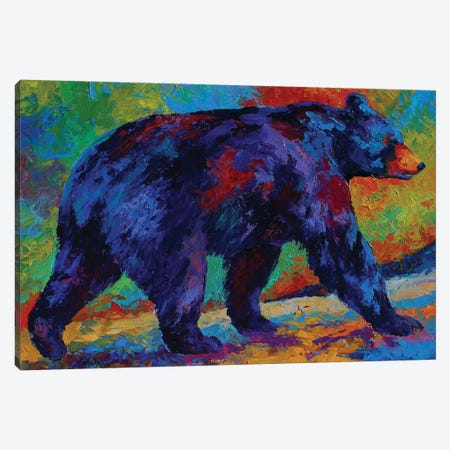 Black Bear III Canvas Print #MRS21} by Marion Rose Canvas Print