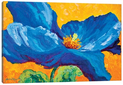 Blue Poppy II Canvas Art Print