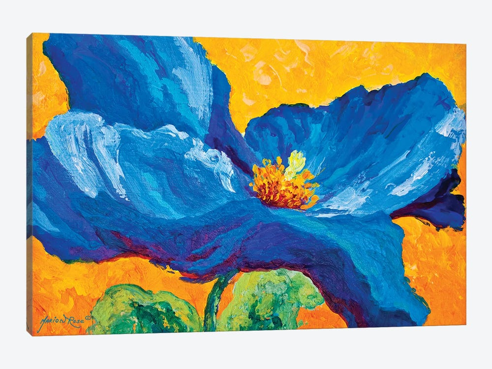 Blue Poppy II by Marion Rose 1-piece Canvas Art