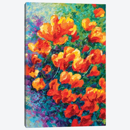 California Poppies Canvas Print #MRS27} by Marion Rose Canvas Art