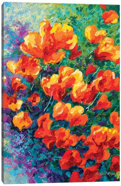 California Poppies Canvas Art Print
