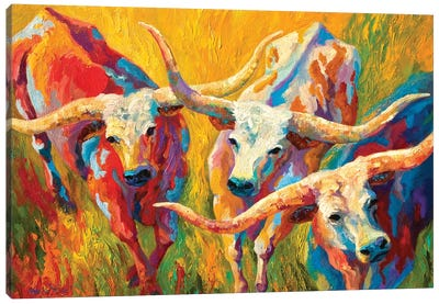 Dance Of The Longhorns Canvas Art Print