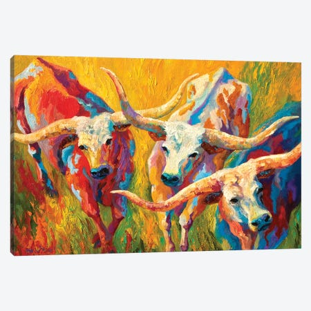 Dance Of The Longhorns 3-Piece Canvas #MRS37} by Marion Rose Canvas Print