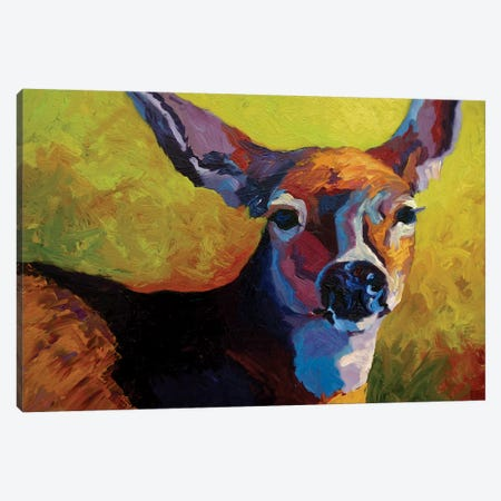 Doe Look Canvas Print #MRS39} by Marion Rose Canvas Art