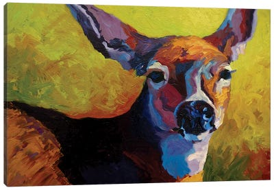 Doe Look Canvas Art Print